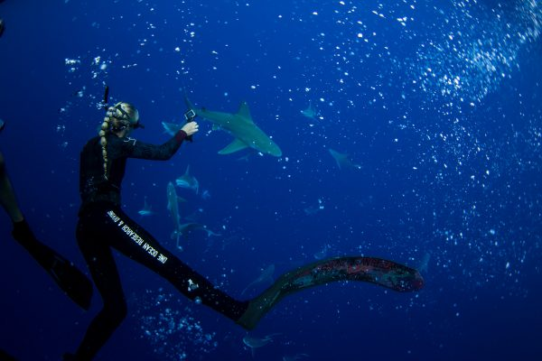 One Ocean Diving by Oceanbluesky.com